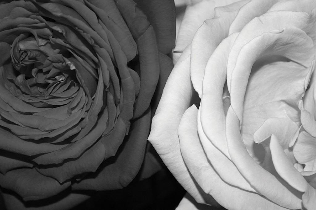 Branding-Images_Roses