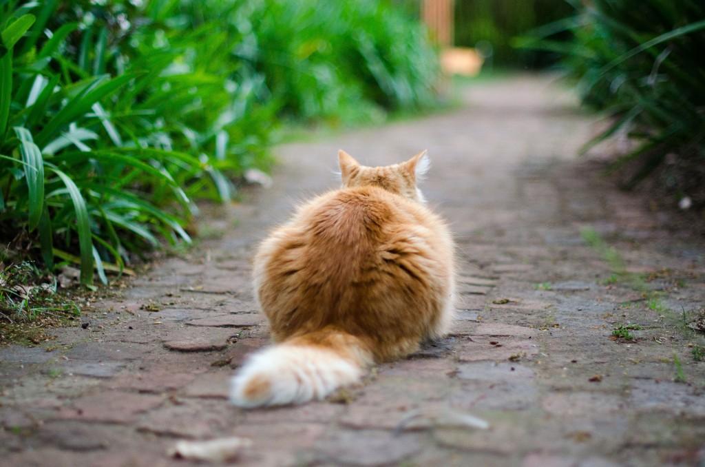 Garden_Kitty