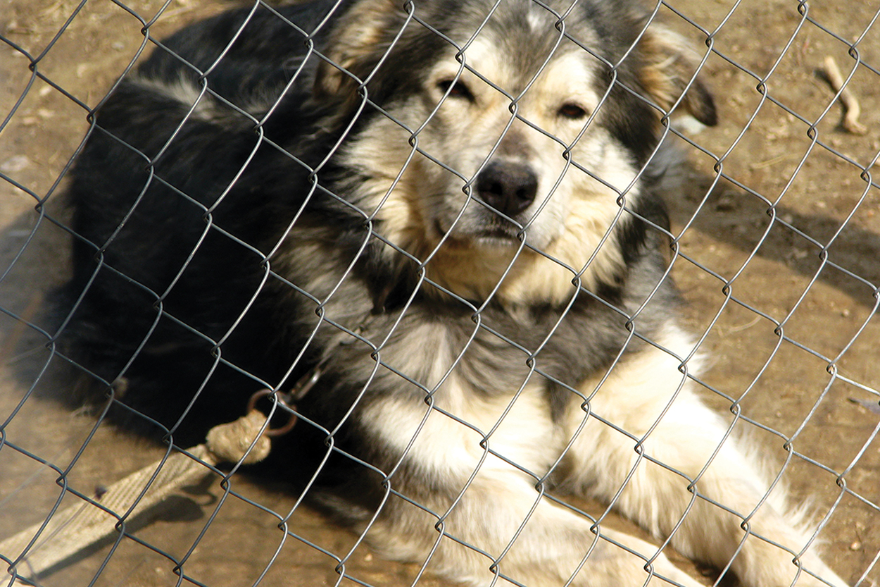 Furthermore, I Contend That It Is Misguided For The Counseling Profession  To Advocate For The Protection Of Animals That We Happen To Use In ...