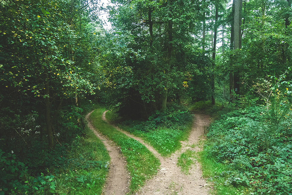 Counselors' career paths and insights - Counseling Today